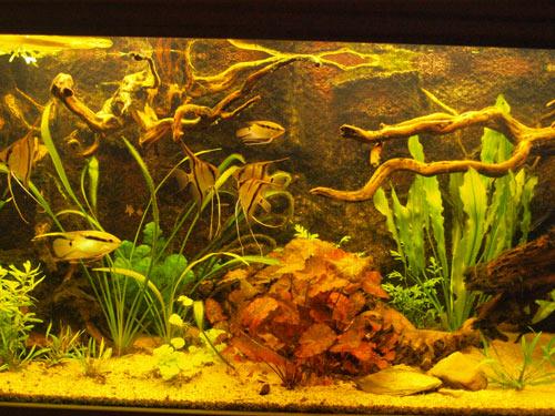 aquarium9-11-2009-5